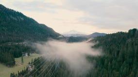 Ομιχλώδες δάσος στα βουνά απόθεμα βίντεο