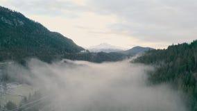 Ομιχλώδες δάσος στα βουνά φιλμ μικρού μήκους