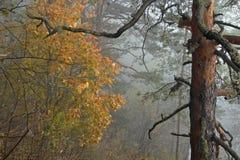 ομιχλώδες δάσος φθινοπώ&rh Στοκ Εικόνα