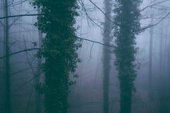 ομιχλώδες δάσος Στοκ Φωτογραφία