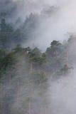 ομιχλώδες δάσος Στοκ φωτογραφία με δικαίωμα ελεύθερης χρήσης