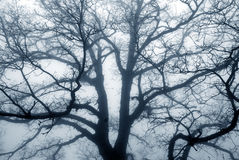 ομιχλώδες δέντρο σκιαγρ στοκ φωτογραφία με δικαίωμα ελεύθερης χρήσης
