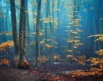 Ομιχλώδες δασικό μυστικό δάσος φθινοπώρου φθινοπώρου στην μπλε ομίχλη Στοκ Φωτογραφίες