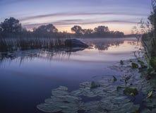 Ομιχλώδες θερινό τοπίο με το μικρό δασικό ποταμό στοκ εικόνα