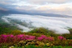 ομιχλώδες λιβάδι λουλ&om στοκ εικόνες