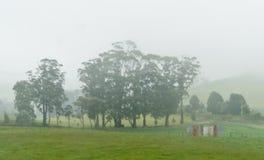Ομιχλώδες πρωί, Τασμανία, Αυστραλία στοκ εικόνα