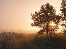 ομιχλώδες πρωί Στοκ Φωτογραφίες