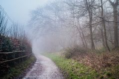 ομιχλώδες τοπίο, ειρηνική άποψη του χαμηλού φωτός στην ομιχλώδη δασική, misty ομιχλώδη δασική πορεία το χειμώνα ή το χρόνο άνοιξη Στοκ Εικόνες