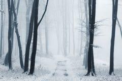 Ομιχλώδης δασική πορεία που καλύπτεται στο χιόνι κατά τη διάρκεια του χειμώνα Στοκ φωτογραφία με δικαίωμα ελεύθερης χρήσης