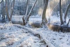 ομιχλώδης δασικός ποταμός Στοκ Εικόνες