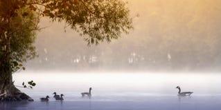 ομιχλώδης λίβρα Στοκ Εικόνες