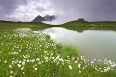 ομιχλώδης λίμνη Στοκ Εικόνες
