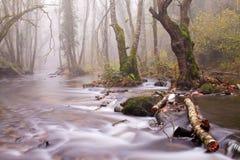 ομιχλώδης ποταμός ημέρας Στοκ Εικόνες