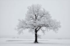 ομιχλώδης χειμώνας ημέρας μόνο δέντρο πεδίων Στοκ Εικόνες
