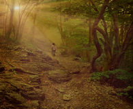 ομιχλώδη δάση περπατήματος κοριτσιών Στοκ φωτογραφία με δικαίωμα ελεύθερης χρήσης