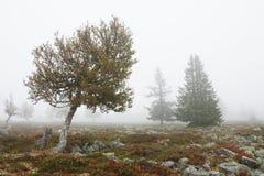 ομιχλώδη δέντρα τοπίων πτώση& Στοκ εικόνες με δικαίωμα ελεύθερης χρήσης