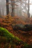 ομιχλώδη δασικά γιγαντιαία βουνά Στοκ Φωτογραφίες