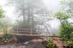 Ομιχλώδεις δάσος και γέφυρα πέρα από το ρεύμα Στοκ εικόνες με δικαίωμα ελεύθερης χρήσης
