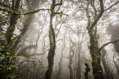 Ομιχλώδες δάσος με τις ακτίνες ήλιων Στοκ εικόνα με δικαίωμα ελεύθερης χρήσης