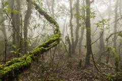 Ομιχλώδες δάσος με τις ακτίνες ήλιων Στοκ φωτογραφία με δικαίωμα ελεύθερης χρήσης