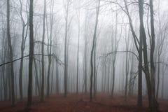 Ομιχλώδες δάσος οξιών στοκ εικόνες