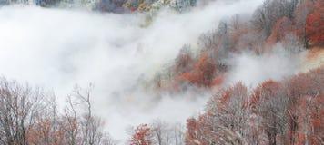 Ομιχλώδες δάσος οξιών στοκ φωτογραφία με δικαίωμα ελεύθερης χρήσης