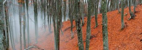 Ομιχλώδες δάσος οξιών στοκ εικόνα