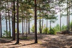 ομιχλώδες δάσος πρωινού Στοκ εικόνες με δικαίωμα ελεύθερης χρήσης