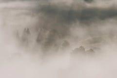 Ομιχλώδες δάσος, στην ανατολή Στοκ Εικόνα