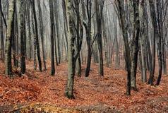 ομιχλώδες δάσος φθινοπώρου στοκ εικόνα με δικαίωμα ελεύθερης χρήσης