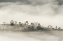 Ομιχλώδες δάσος Στοκ Φωτογραφίες