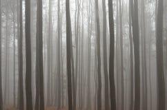 ομιχλώδες δάσος Στοκ Εικόνα