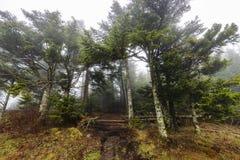 ομιχλώδες δάσος Στοκ φωτογραφίες με δικαίωμα ελεύθερης χρήσης