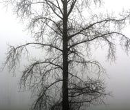 Ομιχλώδες δέντρο Στοκ εικόνα με δικαίωμα ελεύθερης χρήσης