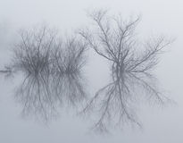 Ομιχλώδες αντανακλαστικό νησί στη λίμνη γυαλιού στοκ εικόνες