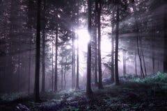 Ομιχλώδες δασικό δέντρο φαντασίας με το φως του ήλιου Στοκ Φωτογραφίες