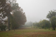 Ομιχλώδες δασικό τοπίο στοκ φωτογραφίες