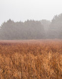 Ομιχλώδες λιβάδι το χειμώνα Στοκ εικόνες με δικαίωμα ελεύθερης χρήσης