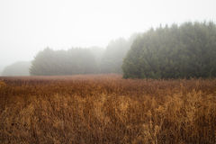 Ομιχλώδες λιβάδι το χειμώνα Στοκ Εικόνα