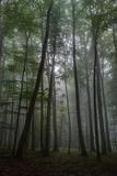 Ομιχλώδες καλοκαίρι Forrest Στοκ φωτογραφίες με δικαίωμα ελεύθερης χρήσης