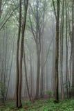 Ομιχλώδες καλοκαίρι Forrest Στοκ εικόνα με δικαίωμα ελεύθερης χρήσης