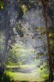 Ομιχλώδες πρωί στο δάσος Στοκ Εικόνες