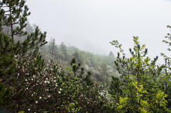 Ομιχλώδες τοπίο με τα άσπρα λουλούδια Στοκ Φωτογραφία