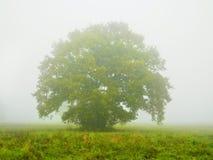 Ομιχλώδες τοπίο πρωινού με το ενιαίο δέντρο Στοκ Φωτογραφίες