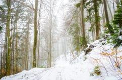 Ομιχλώδες χειμερινό δάσος Στοκ Εικόνες
