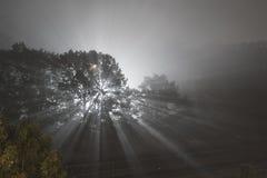 ομιχλώδης νύχτα Στοκ εικόνα με δικαίωμα ελεύθερης χρήσης