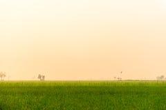 Ομιχλώδης τομέας ρυζιού Στοκ Φωτογραφίες