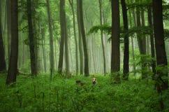 Ομιχλώδης φύση Στοκ εικόνες με δικαίωμα ελεύθερης χρήσης