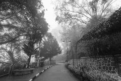 Ομιχλώδης misty οδική ένδειξη που συχνάζεται σε γραπτό Στοκ Φωτογραφίες