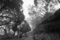 Ομιχλώδης misty οδική ένδειξη που συχνάζεται Στοκ φωτογραφία με δικαίωμα ελεύθερης χρήσης